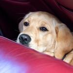 Dog Exeter